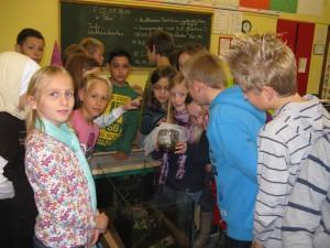 Stabheuschrecken, 4c, 31.10.2012