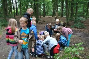 Unterrichtsgang Wald